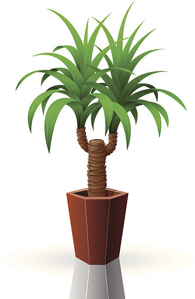 Palm Tree Yucca Clip Art, Vector Images & Illustrations - iStock