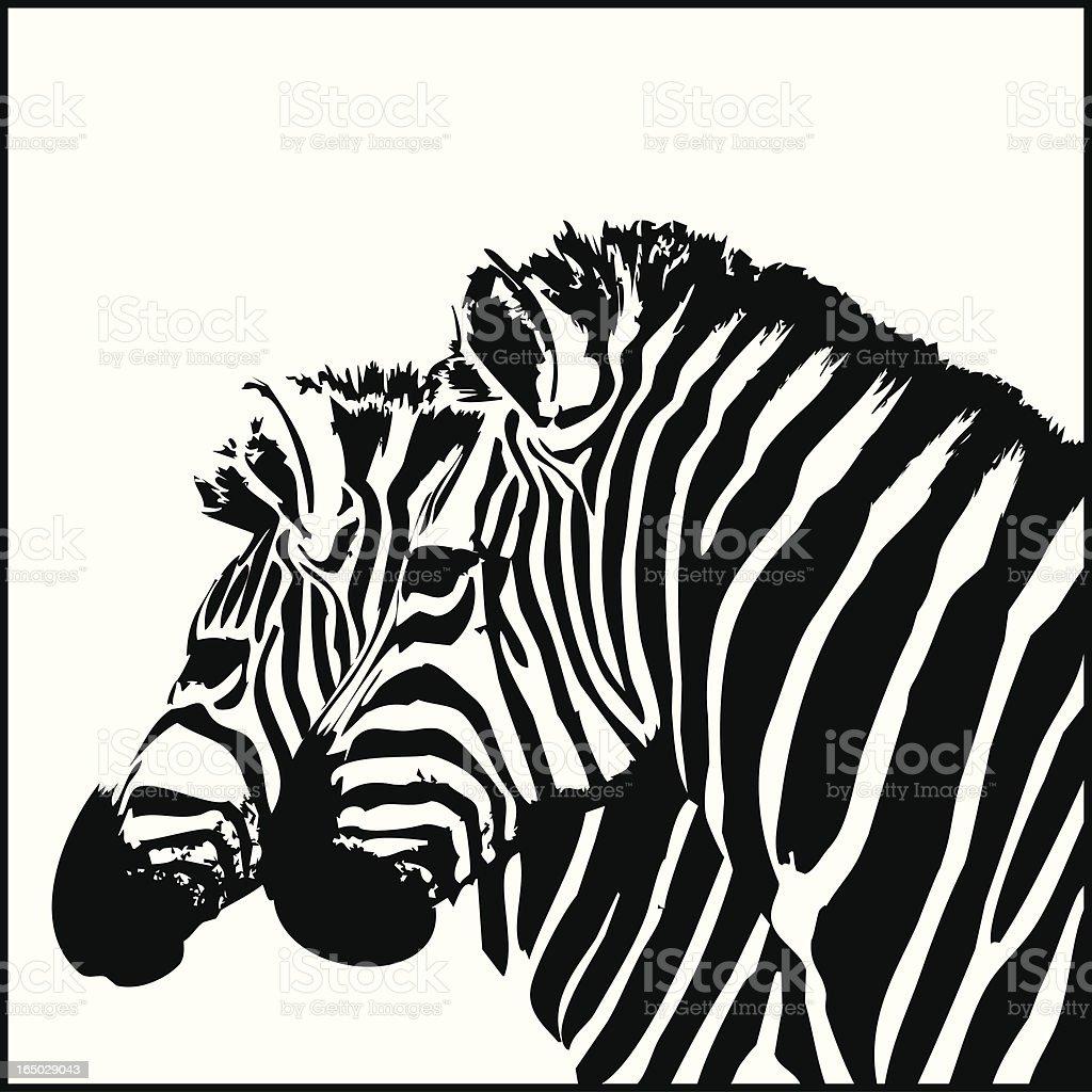 Zebra Couple royalty-free stock vector art