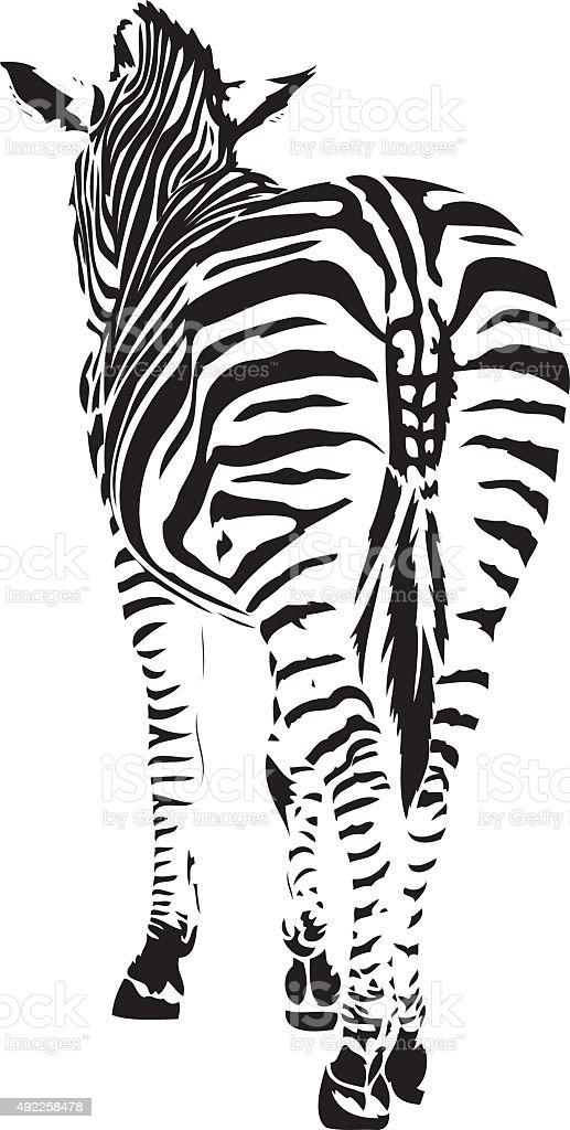 Zebra illustration vector art illustration
