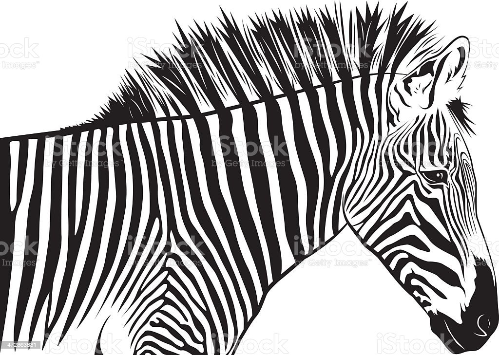 zebra face clip art vector images amp illustrations istock