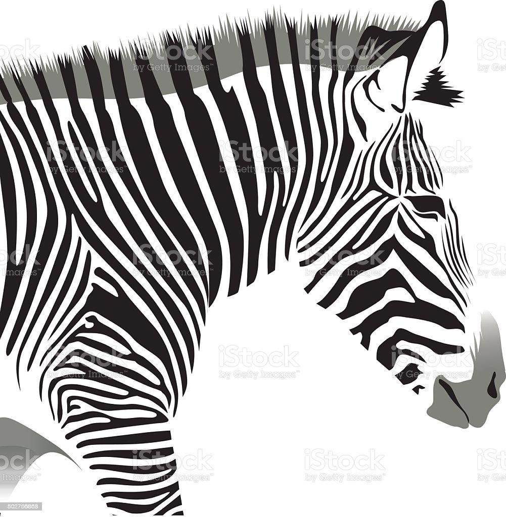 Zebra's Head vector art illustration