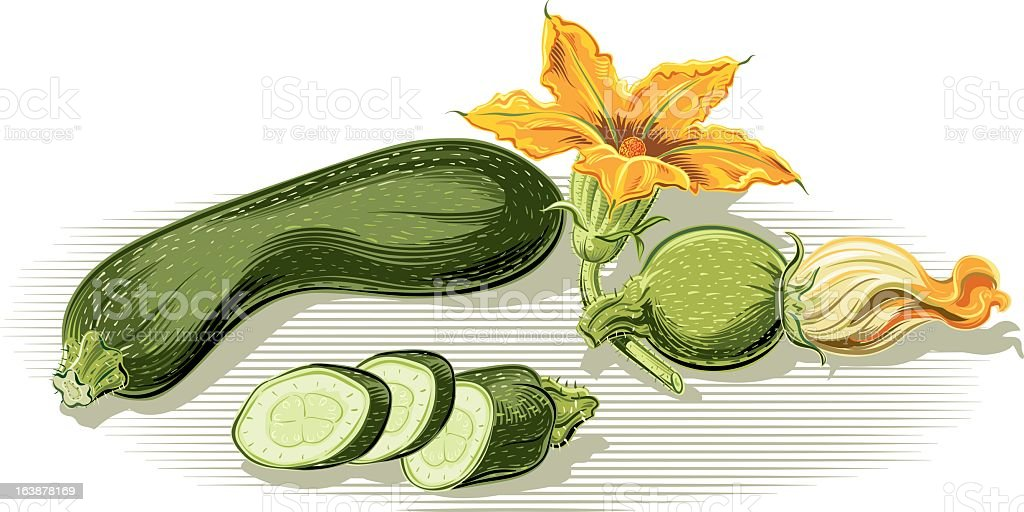 Zucchini and squash blossoms vector art illustration