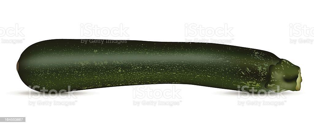 Zucchini vector art illustration