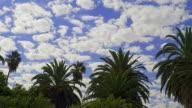 PALM TREES 1 video