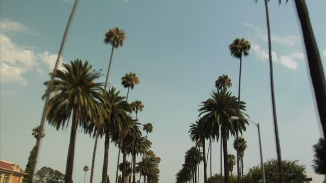 PALM TREE STREET video