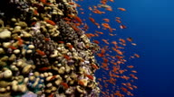 CORALS AND FISHES video
