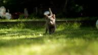 CUTE KITTEN CAT IN THE GRASS video