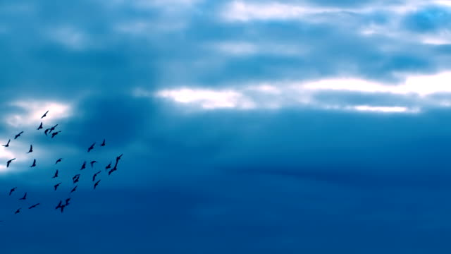FLYING MAGICAL FLOCK OF BIRDS video