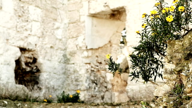 YELLOW FLOWERS IN FRONT OF RUIN [CC/CG] video