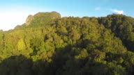 THICK BORNEO RAINFOREST AERIAL VIDEO video
