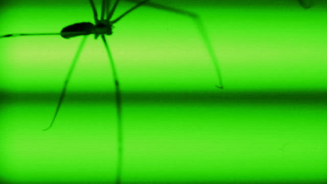 SPIDER CRAWL (HD) video