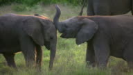 1080i baby elephants playing video