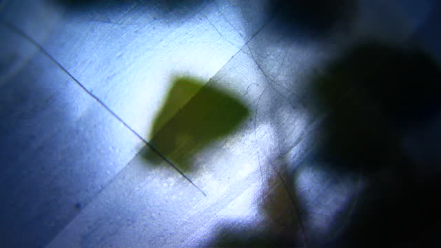 HD 1080i Grit Abstract through celophane skin with leaves video