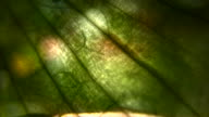 HD 1080i Grit Abstract through plant skin with branches video