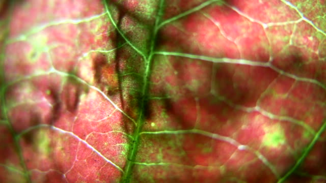 HD 1080i Grit Abstract with leaf veins 2 video