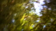 HD 1080i Grit Abstract with leaves and branches video