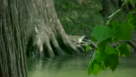 HD 1080i Guadalupe River in Texas 11 video