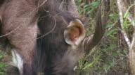 HD 1080i Kudu in South Africa video