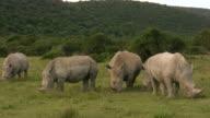 HD 1080i Rhinoceros 8 video