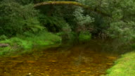 HD 1080i River in Knysna South Africa 4 video