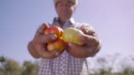 14-Portrait Man Farmer Smiling And Showing Tomatoes To Camera video