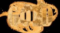 HDTV @25fps: Liquid Gold video