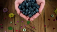 4k Colourful Composition of Fresh Blueberries in Hand - Wooden Background video