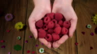 4k Colourful Composition of Fresh Raspberries in Hand - Wooden Background video