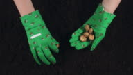 4k Gardening Composition of Hands in Gloves planting Flower Bulbs in Soil video