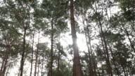4k: Light through the green tree line video