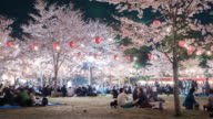 4k: People enjoy cherry blossoms (sakura) in Park, Sendai video