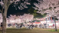 4k: people to enjoy the illuminated cherry blossoms video