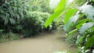 4k small stream in the park video