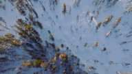 4k Snow Forest Aerial video