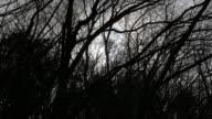 4k: Sun shines through tree video