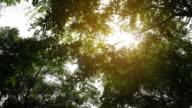 4k Sunshine Through Leaves video