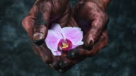 4k Technical Composition of Dirty Mechanic Hands Holding Flower video