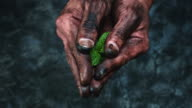 4k Technical Composition of Dirty Mechanic Hands Holding Green Leaf video