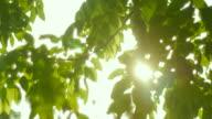 4K:Sunshine Through the tree video