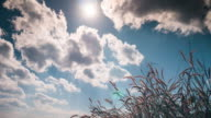 4K:Time-lapse of blue sky and cloudy with meadow video