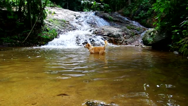 a dog at the waterfall video