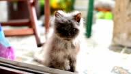Abandoned cat video