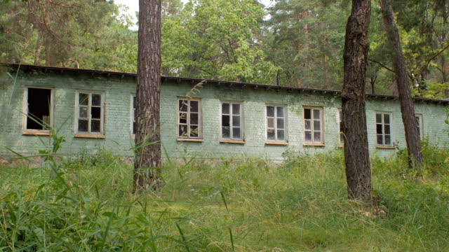 abandoned house in forest, summer day video