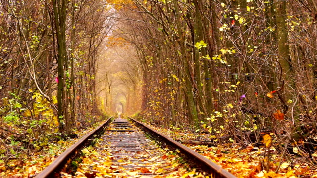 Abandoned Railway under Autumn Colored Trees video
