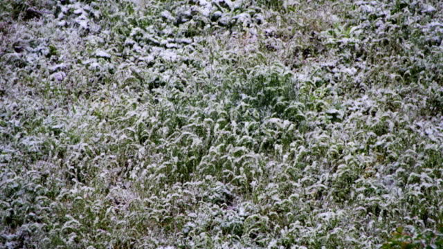 Abnormal weather. Snow goes to the Green Grass in April at Spring video