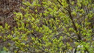 Abnormal weather. Snow in late April. In the trees, green leaves and flowers video