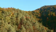 AERIAL Above the treetops in autumn video