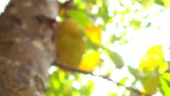 Abstract blurred nature bokeh video