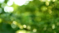 Abstract bokeh and blurred colorful nature background video