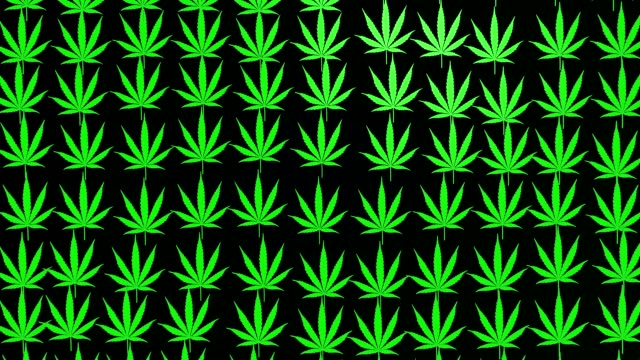 Abstract cannabis leaves on dark video